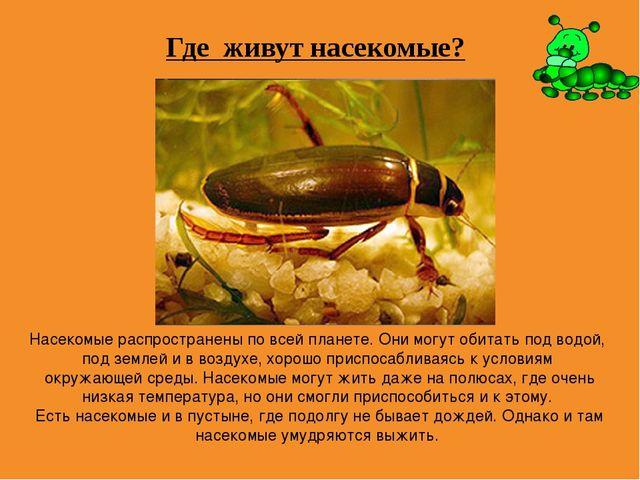 Где живут насекомые? Насекомые распространены по всей планете. Они могут обит...