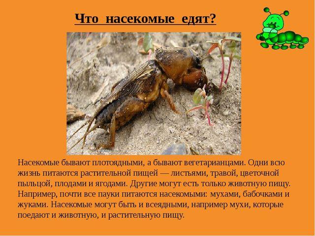 Что насекомые едят? Насекомые бывают плотоядными, а бывают вегетарианцами. Од...