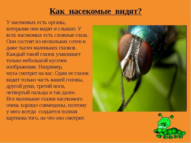 Как насекомые видят? У насекомых есть органы, которыми они видят и слышат. У...