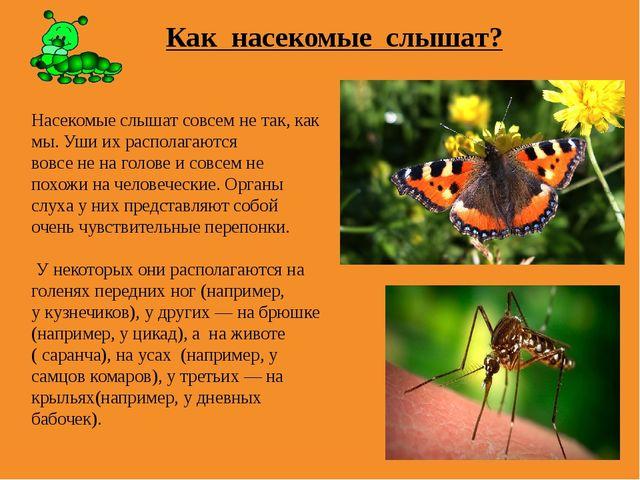 Как насекомые слышат? Насекомые слышат совсем не так, как мы. Уши их располаг...