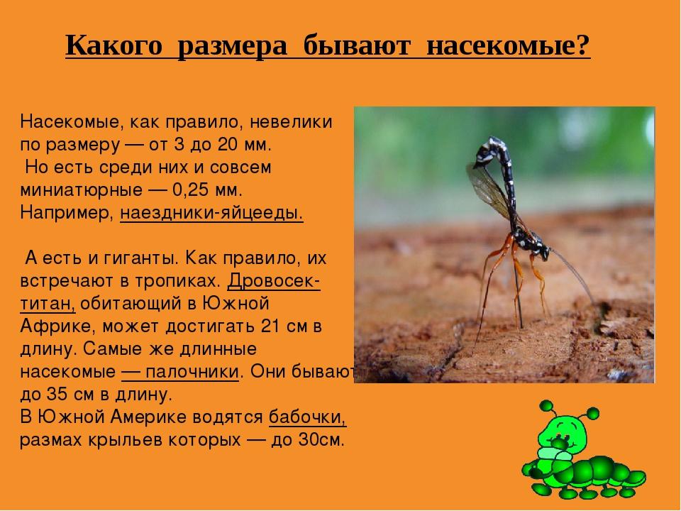 Какого размера бывают насекомые? Насекомые, как правило, невелики по размеру...