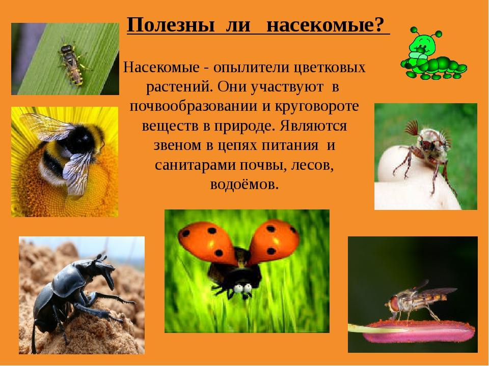 Насекомые - опылители цветковых растений. Они участвуют в почвообразовании и...