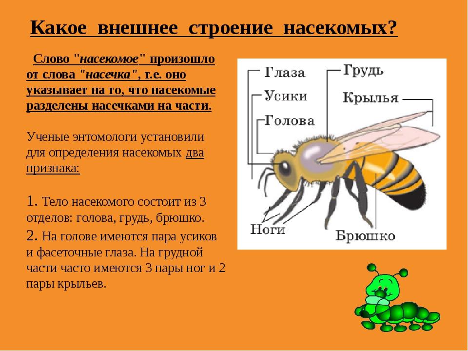 """Какое внешнее строение насекомых? Слово """"насекомое"""" произошло от слова""""насеч..."""
