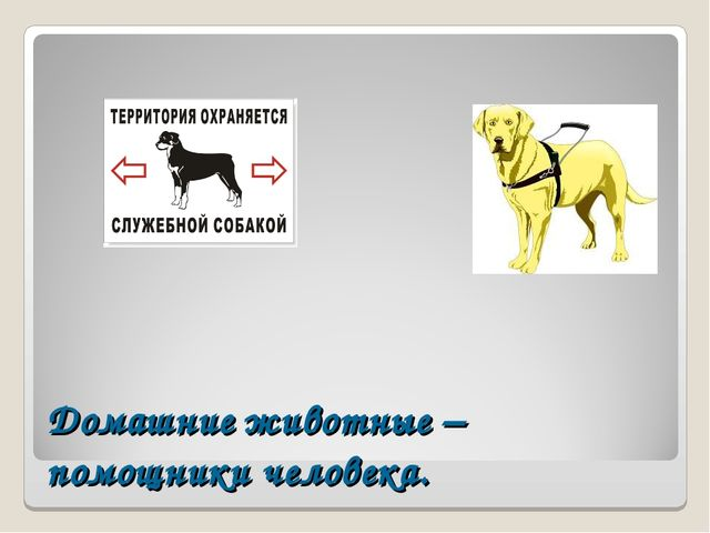 Домашние животные – помощники человека.
