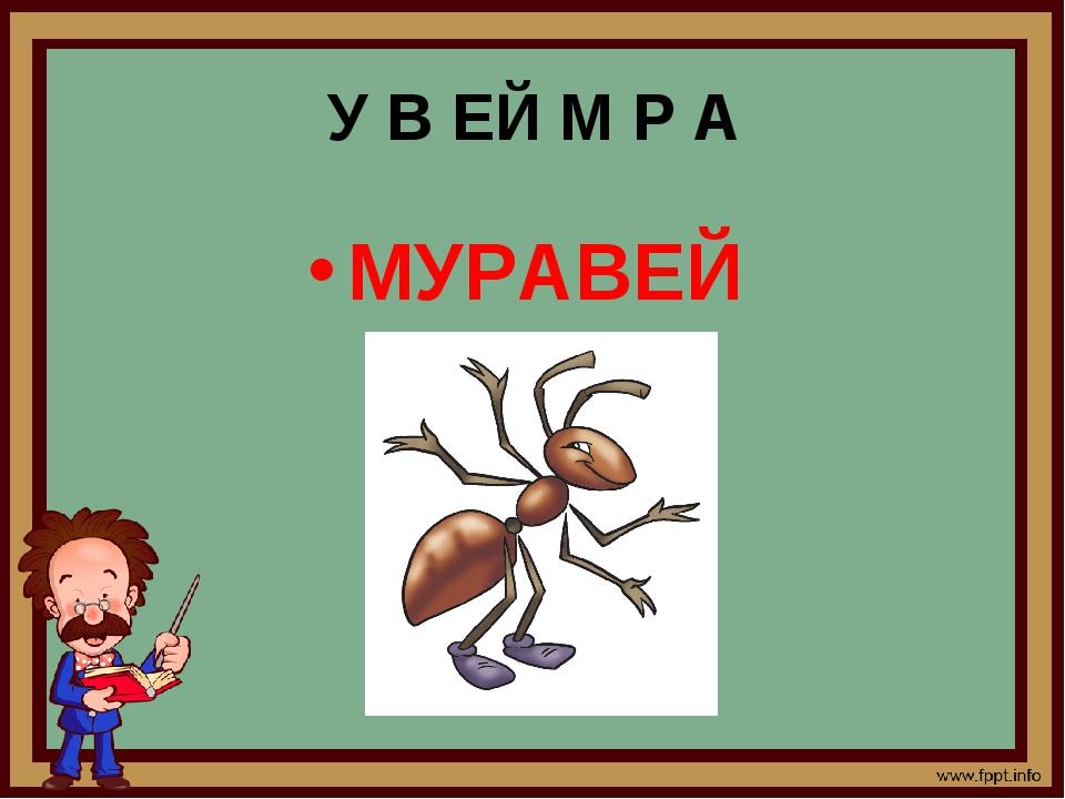 У В ЕЙ М Р А МУРАВЕЙ