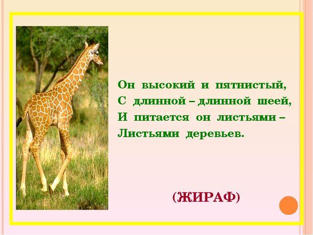 (ЖИРАФ) Он высокий и пятнистый, С длинной – длинной шеей, И питается он листь...