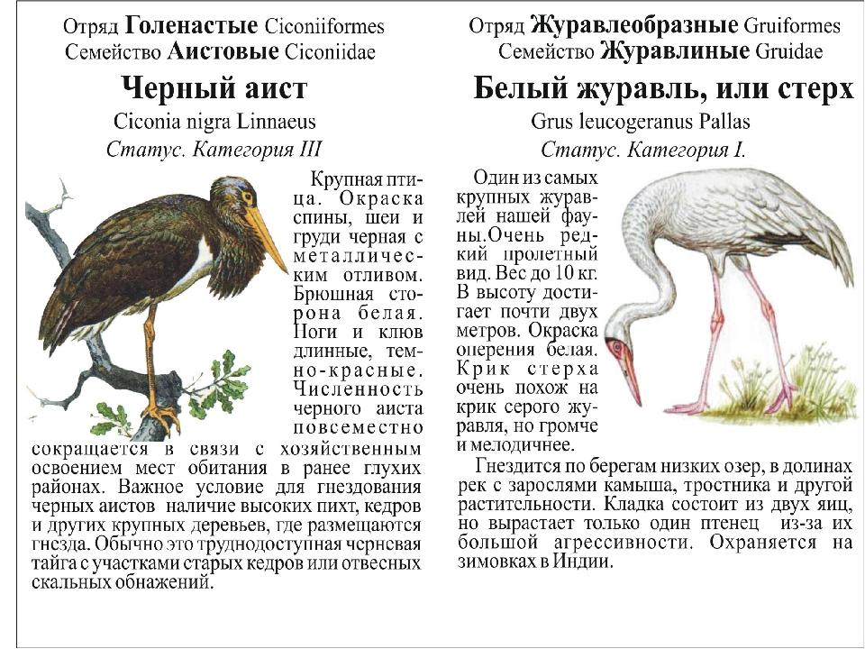 Красная книга кемеровской области животные фото и описание