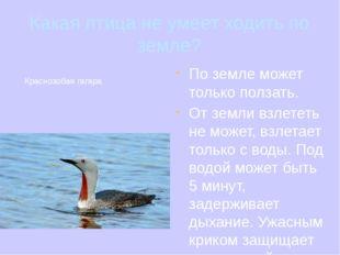 Какая птица не умеет ходить по земле? По земле может только ползать. От земли
