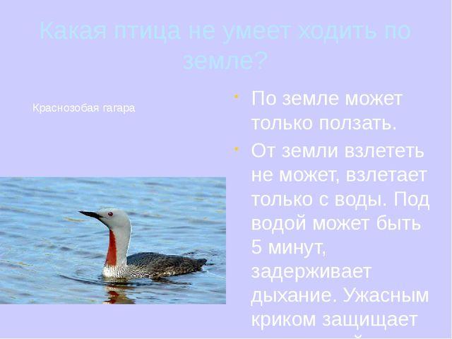 Какая птица не умеет ходить по земле? По земле может только ползать. От земли...