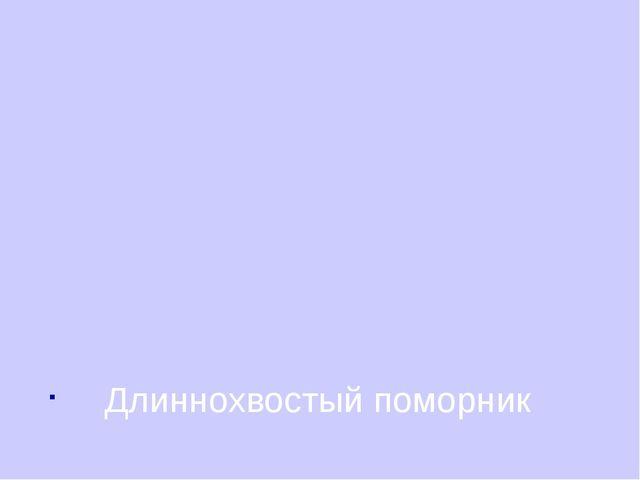Длиннохвостый поморник