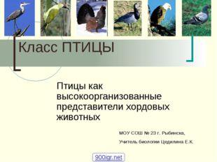 Класс ПТИЦЫ Птицы как высокоорганизованные представители хордовых животных М