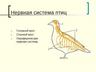 Нервная система птиц Головной мозг; Спинной мозг; Периферическая нервная сист