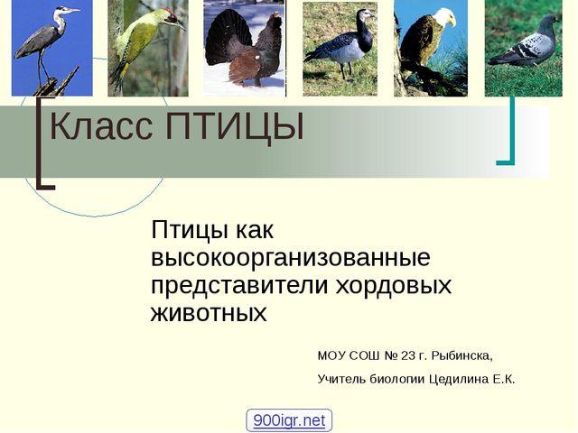 Класс ПТИЦЫ Птицы как высокоорганизованные представители хордовых животных М...