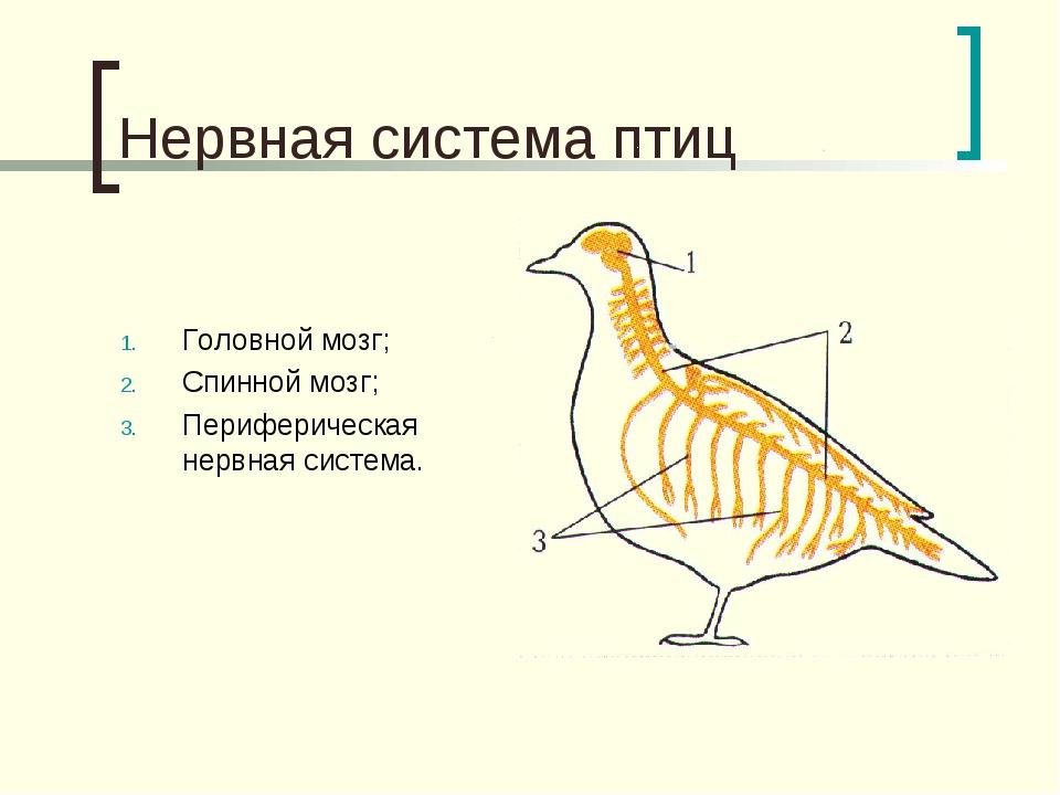тоже слышала система головного мозга у птицы картинки все необходимо