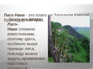 Лаго-Наки- это плато на Западном Кавказе, Краснодарский край. Почти всепл