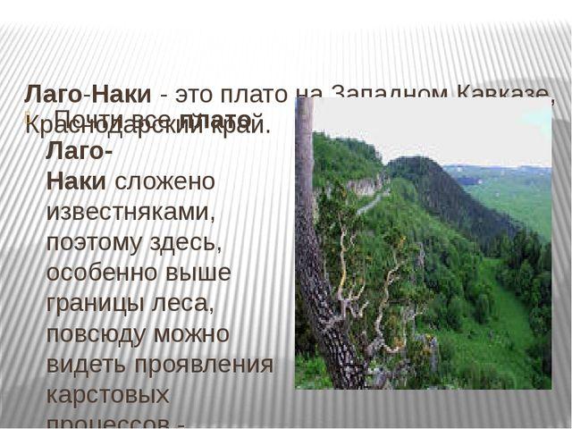 Лаго-Наки- это плато на Западном Кавказе, Краснодарский край. Почти всепл...