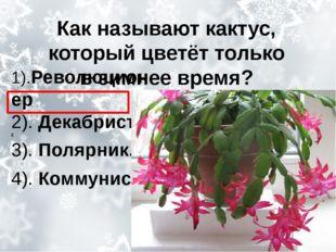 Как называют кактус, который цветёт только взимнее время? 1).Революционер 2)