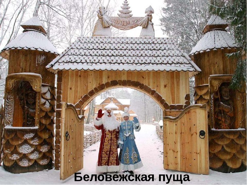 Беловежская пуща Белоруссия