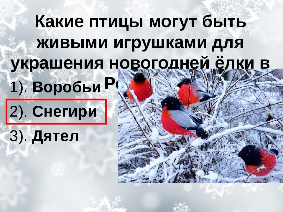Какие птицы могут быть живыми игрушками для украшения новогодней ёлки в Росси...
