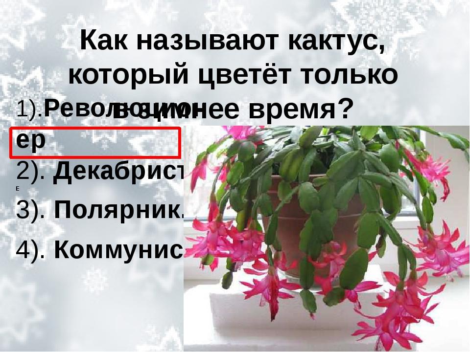 Как называют кактус, который цветёт только взимнее время? 1).Революционер 2)...