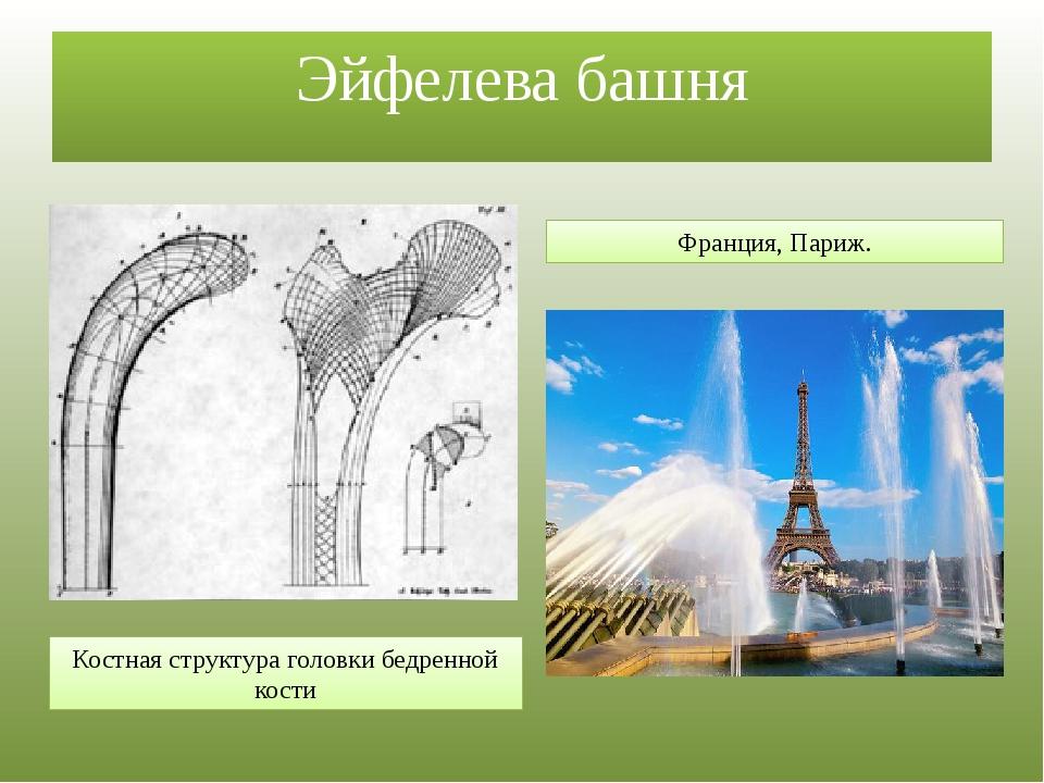 Эйфелева башня Костная структура головки бедренной кости Франция, Париж.
