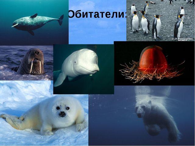 Южный океан Хотя в России понятие Южного океана и не распространено и его тер...