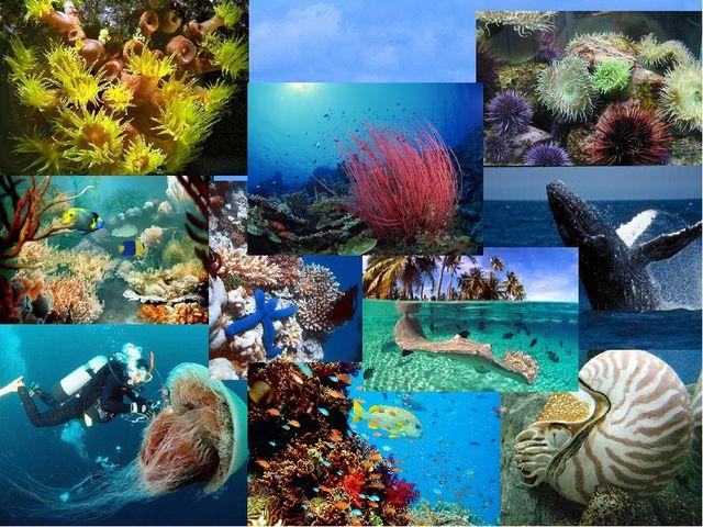 Атлантический океан— второй по величине океан Земли после Тихого океана, ра...