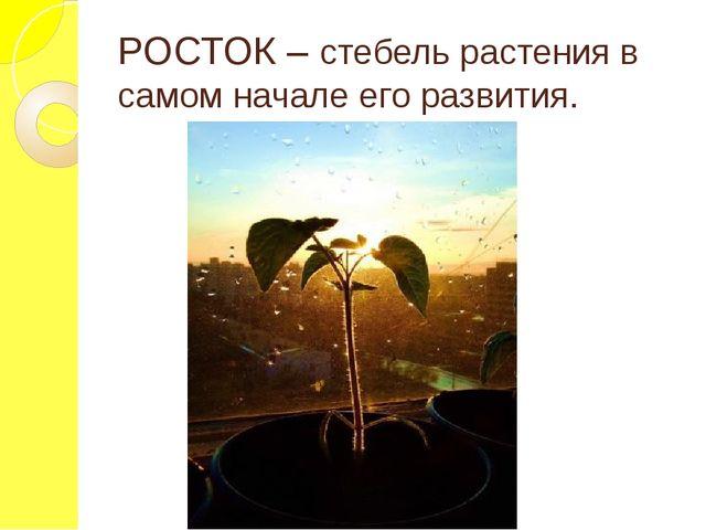 РОСТОК – стебель растения в самом начале его развития.