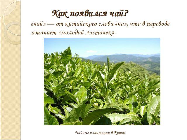 Как появился чай? «чай» — от китайского слова «ча», что в переводе означает «...