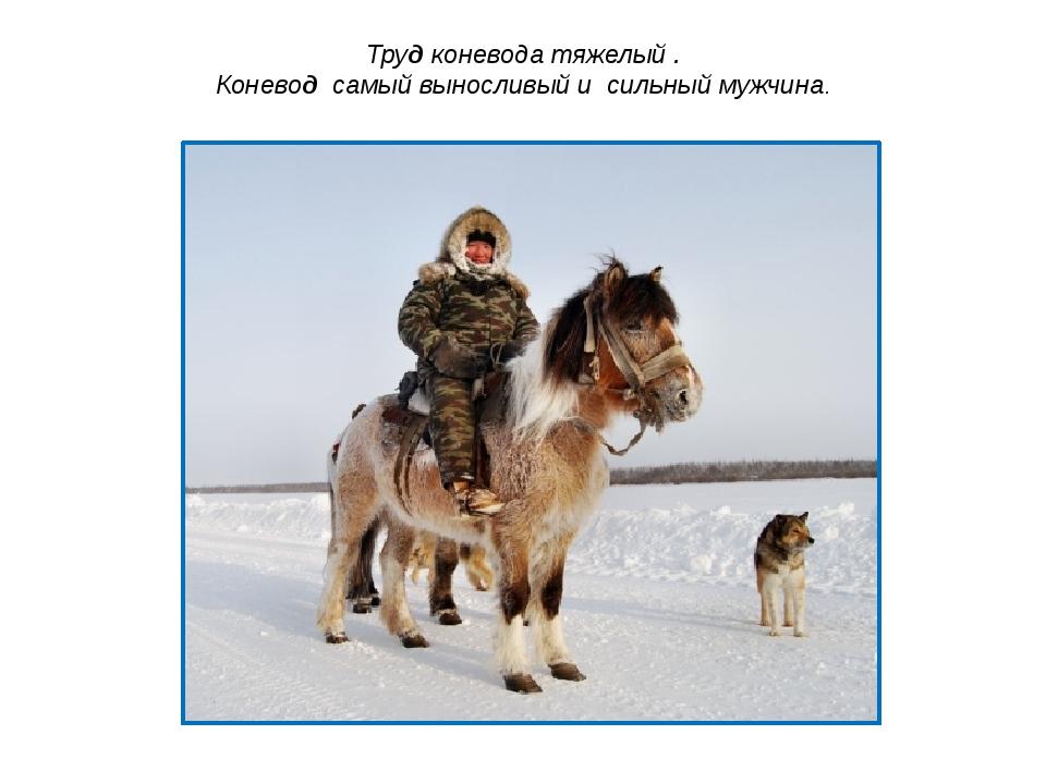 Труд коневода тяжелый . Коневод самый выносливый и сильный мужчина.