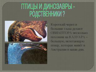 Короткий череп и большие глаза делают ОВИАПТОРА несколько похожим на КАЗУАРА