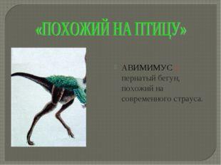 АВИМИМУС – пернатый бегун, похожий на современного страуса.