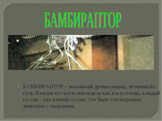 БАМБИРАПТОР – маленький дромеозаврид, величиной с гуся. Каждая его кость выгл...