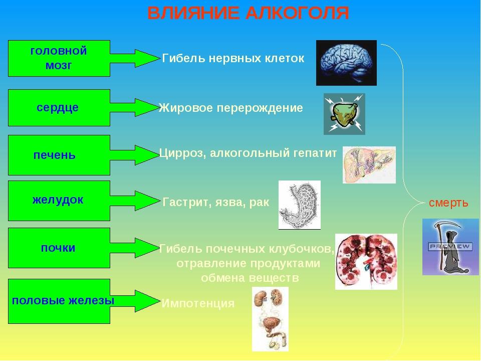 ВЛИЯНИЕ АЛКОГОЛЯ головной мозг Гибель нервных клеток сердце Жировое перерожде...