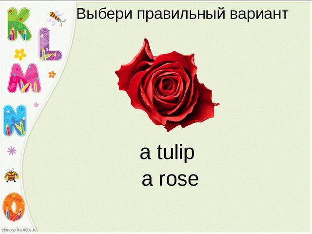 Выбери правильный вариант a tulip a rose