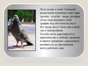 """Чуть позже в этом """"птичьем"""" разделении появилась еще одна группа - голуби - л"""