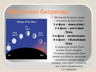 Месячные биоритмы Месячный биоритм связан счетырьмя фазами Луны: 1-я фаза –