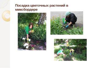 Посадка цветочных растений в миксбордере