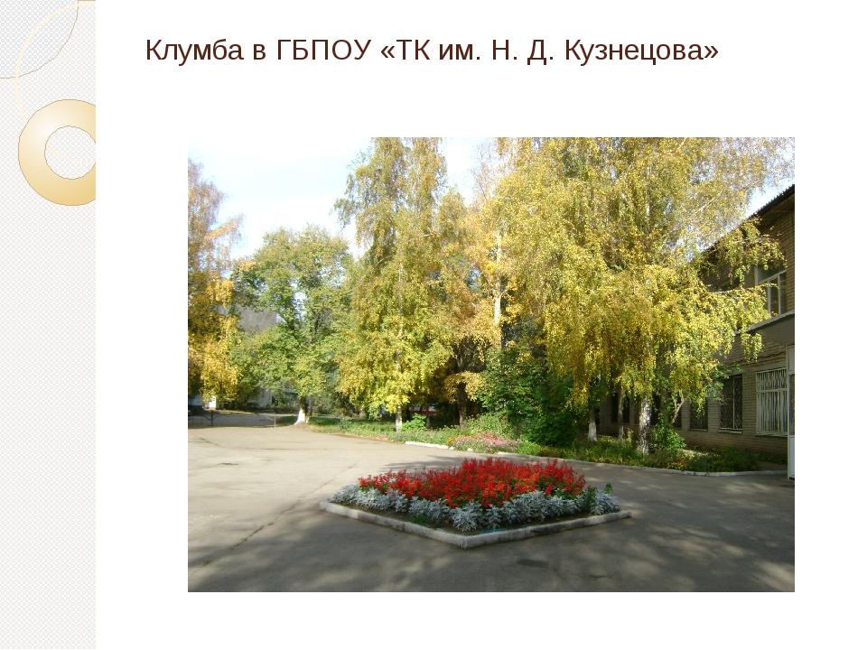 Клумба в ГБПОУ «ТК им. Н. Д. Кузнецова»