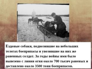 Ездовые собаки, подвозившие на небольших телегах боеприпасы и увозившие на ни