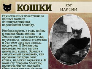 КОШКИ кот МАКСИМ Единственный известный на данный момент ленинградский кот, п