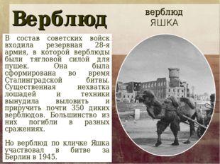 Верблюд В состав советских войск входила резервная 28-я армия, в которой верб
