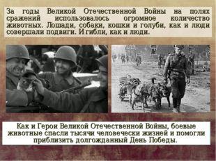 За годы Великой Отечественной Войны на полях сражений использовалось огромное