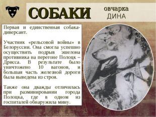 СОБАКИ овчарка ДИНА Первая и единственная собака-диверсант. Участник «рельсов