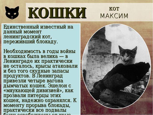 КОШКИ кот МАКСИМ Единственный известный на данный момент ленинградский кот, п...