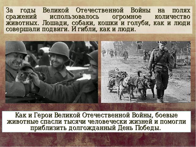За годы Великой Отечественной Войны на полях сражений использовалось огромное...