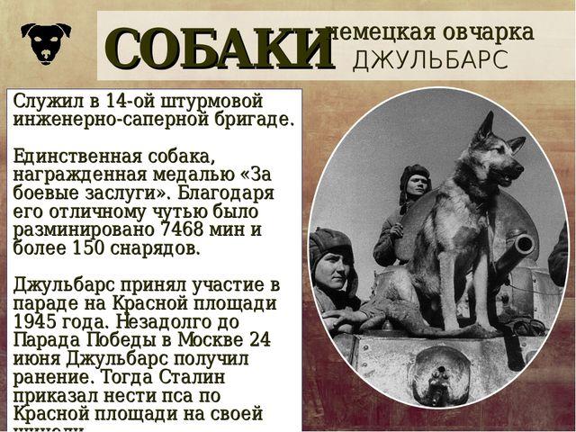 СОБАКИ немецкая овчарка ДЖУЛЬБАРС Служил в 14-ой штурмовой инженерно-саперной...