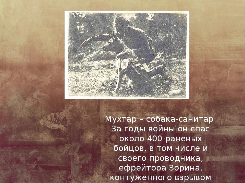 Мухтар – собака-санитар. За годы войны он спас около 400 раненых бойцов, в то...