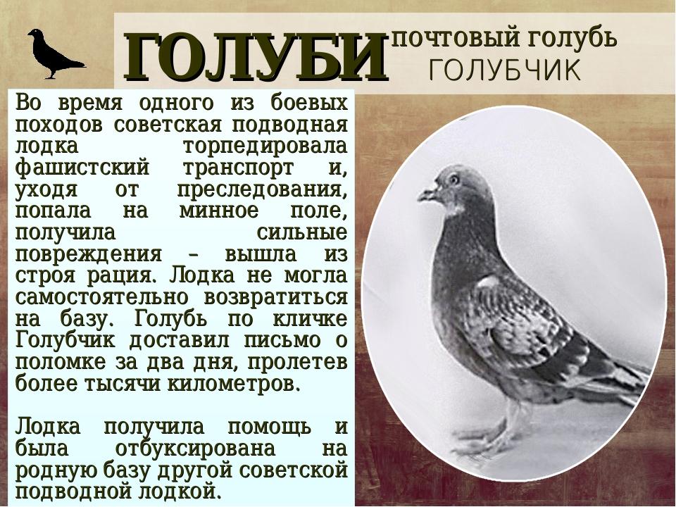 ГОЛУБИ Во время одного из боевых походов советская подводная лодка торпедиров...