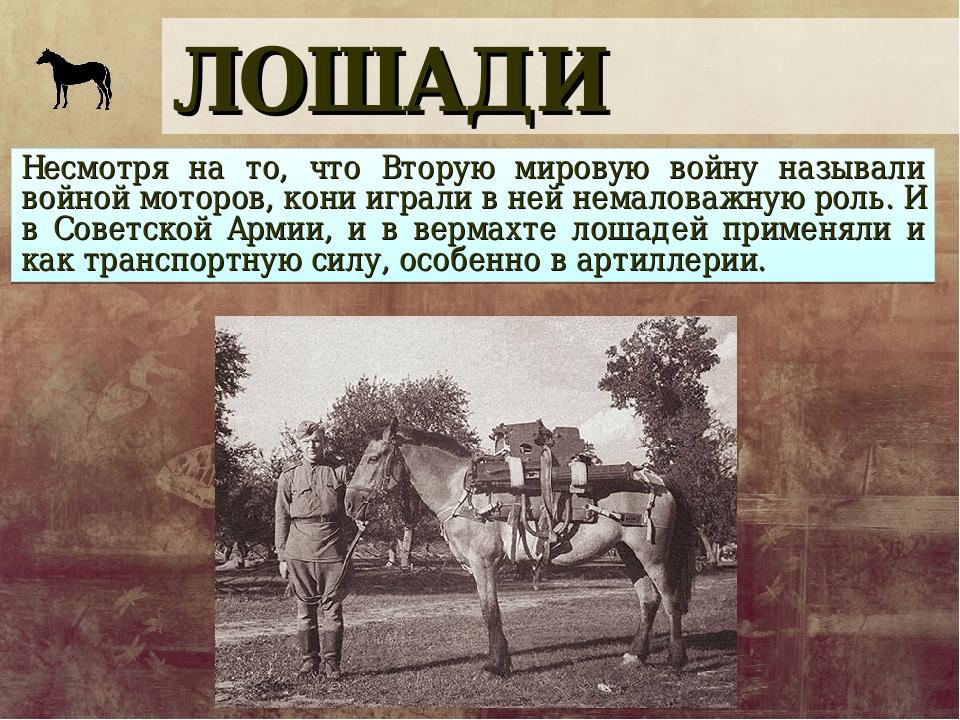 ЛОШАДИ Несмотря на то, что Вторую мировую войну называли войной моторов, кони...